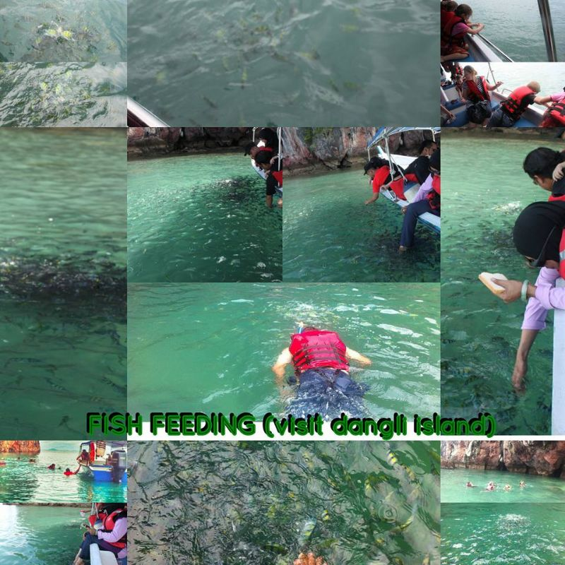 Dangli Island (Fish Feeding)